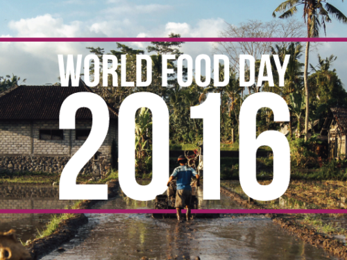 world-food-day-landing-page-banner-01